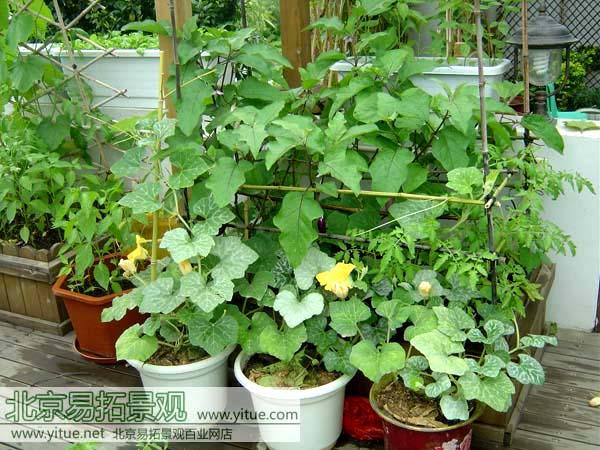 他们多半会喜欢在花园里种一些蔬菜,我猜他们在种菜的时候一定能够图片